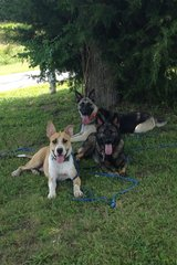 Barbara's Babies Canine Bootcamp in Fort Leonard Wood, Missouri